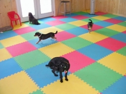 Interlocking rubber tiles in a pet center