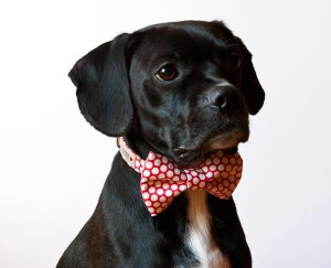 dog-collar-bow-tie