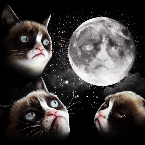 3 Grumpy Cat Moon Shirt