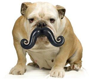 Dog Mustache Chew Toy