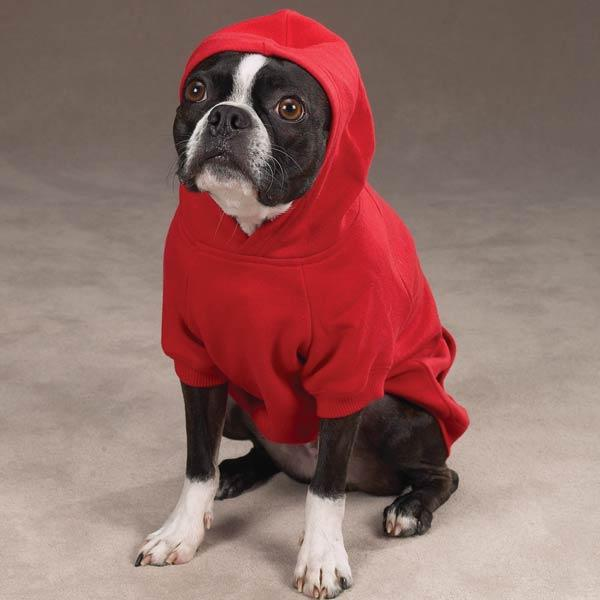 A Hooded Sweatshirt For Your Dog