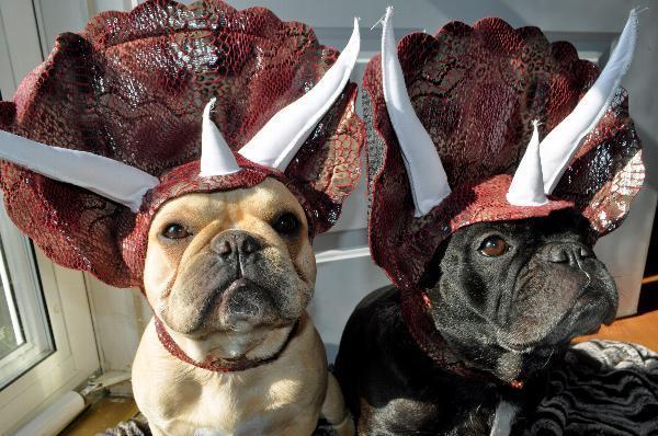 Dog Triceratops Costume
