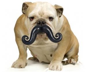 Dog Mustache Chew Toy