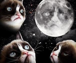 3 Grumpy Cat Moon Shirt