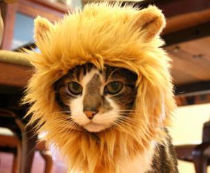 Cat Lion Hat