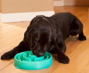 Slo-Bowl: Helps Your Dog Eat More Slowly